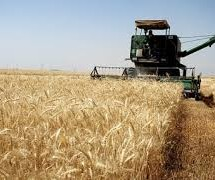 استخدام 10000 نفر از فارغ التحصیلان کشاورزی